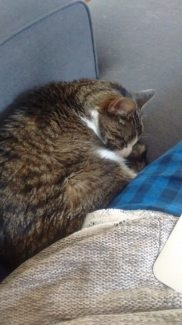 Martha snuggles