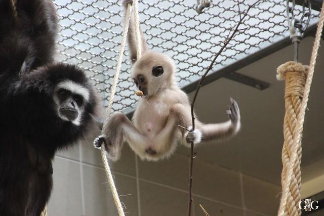Tierpark Friedrichsfelde 17.05.201529