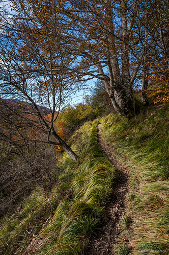 En lo más alto de Zabaleta, Selva de Irati.