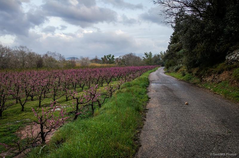 De regreso a Móra d'Ebre por el Camí de Sovarrec
