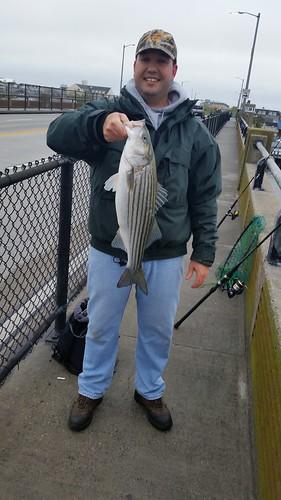 Photo courtesy of David Beach, David Beach holding a striped bass