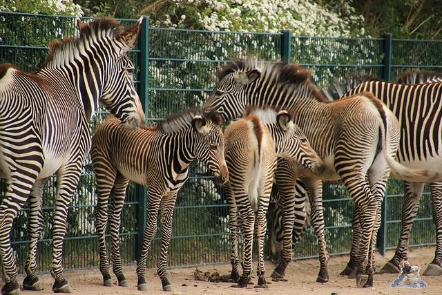 Tierpark Berlin 17.05.2015 110