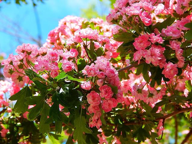 красивый розовый цветочек | horoshogromko.ru