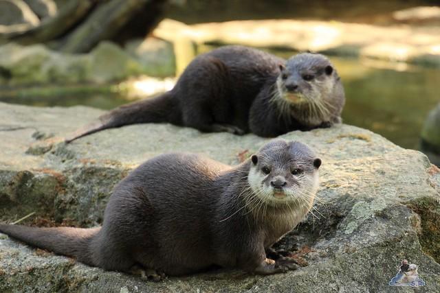 Zoo Berlin 13.05.2015  32