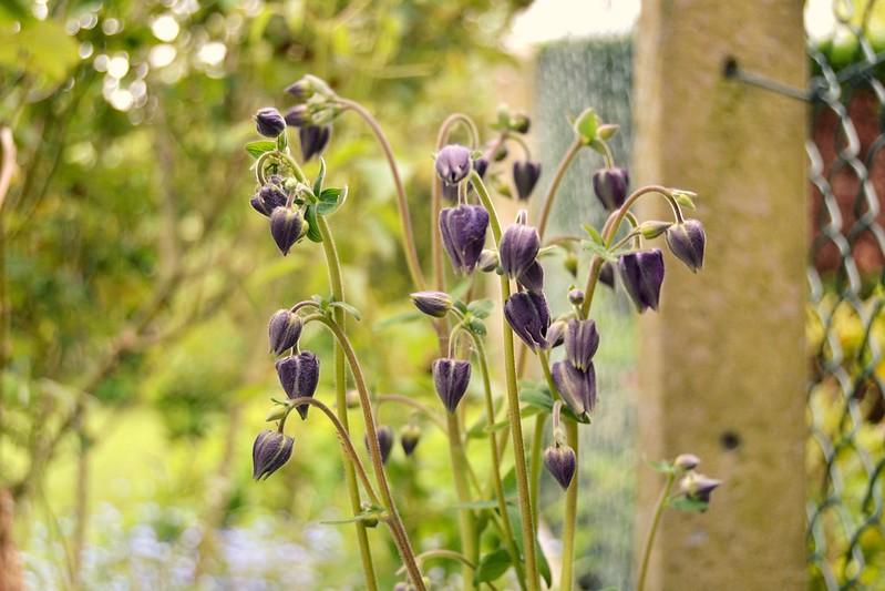 flores violetas 3