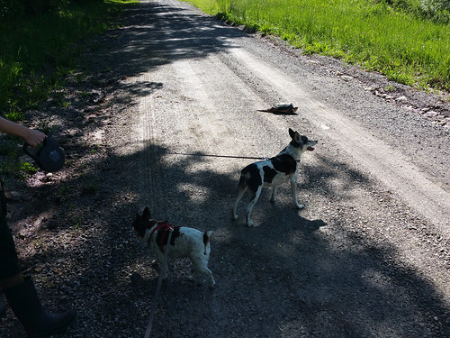 2015-05-25 - Walking Peedee & Rennie - 0005 [flickr]