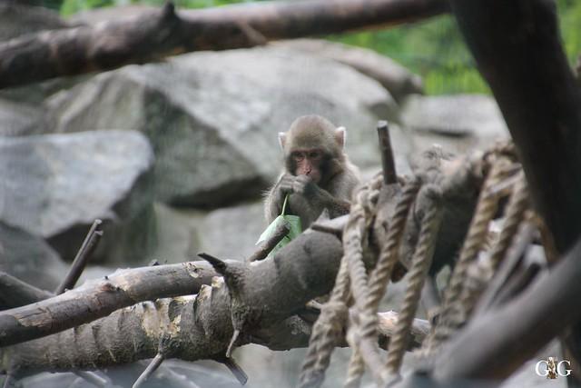 Tierpark Friedrichsfelde 17.05.201525