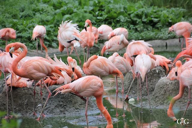 Tierpark Friedrichsfelde 17.05.201517