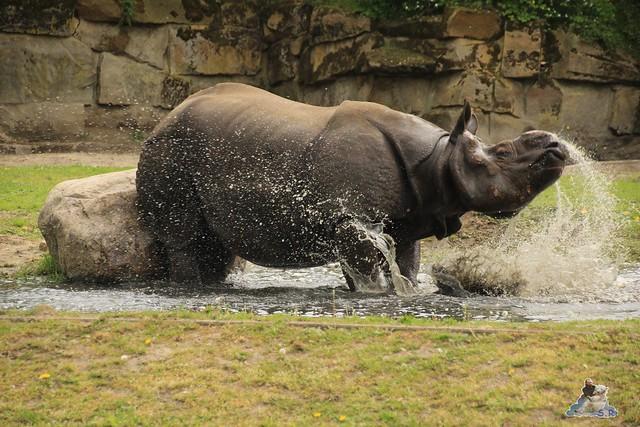 Tierpark Berlin 09.05.2015  150