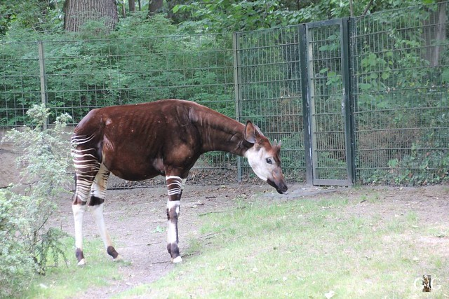 Besuch Zoo Berlin 31.05.201536