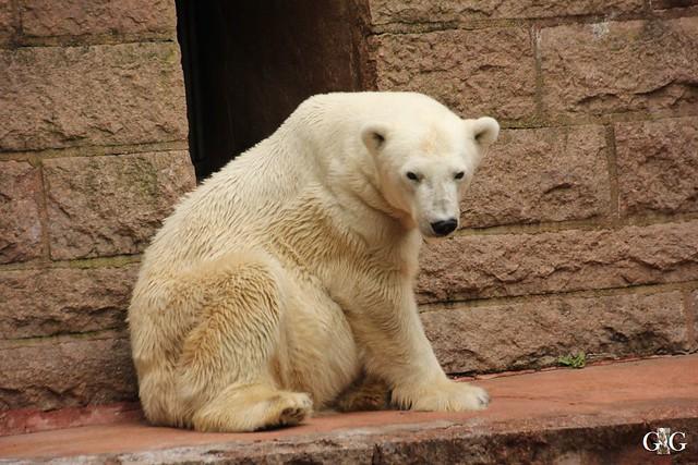 Besuch Zoo Rostock 09.07.201615