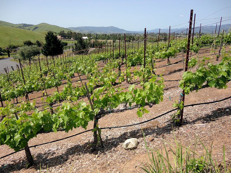 minerality in wine