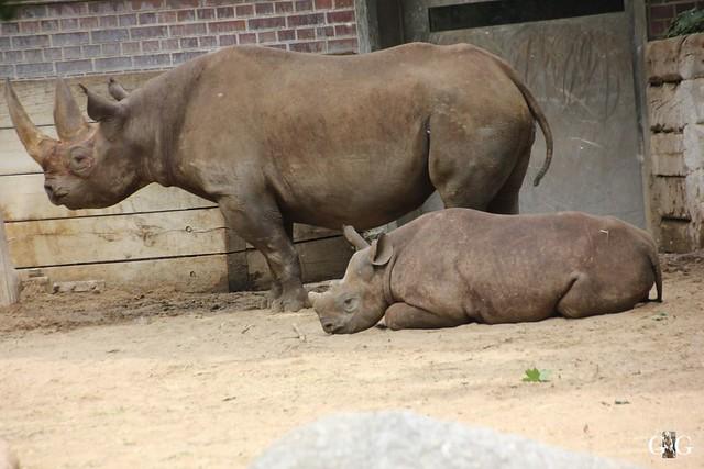 Besuch Zoo Berlin 31.05.201538