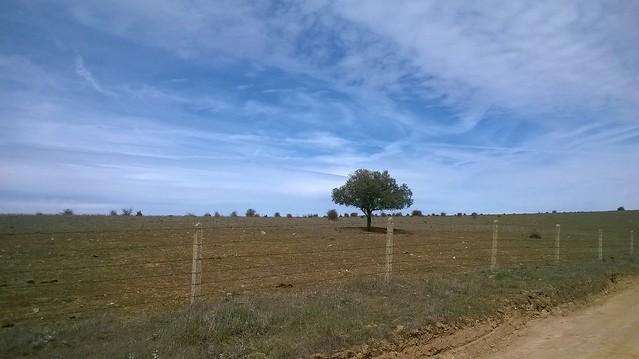 Un árbol en el camino, en la provincia de Salamanca