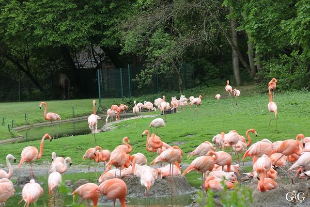 Tierpark Friedrichsfelde 10.05.201531