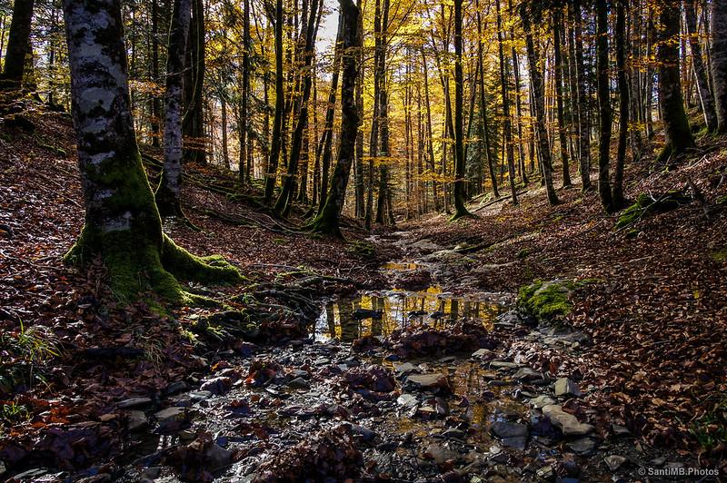 Una vista excepcional del corazón de la Selva de Irati.