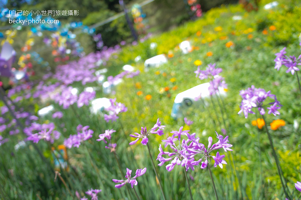 2015.May Small Swiss Garden @Nantou清境小瑞士花園