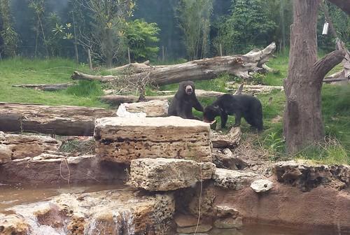 A Sun Bear Story 6