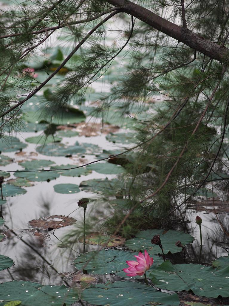 巴雅英达湿地公园 Dengkil Payah Indah Wetlands