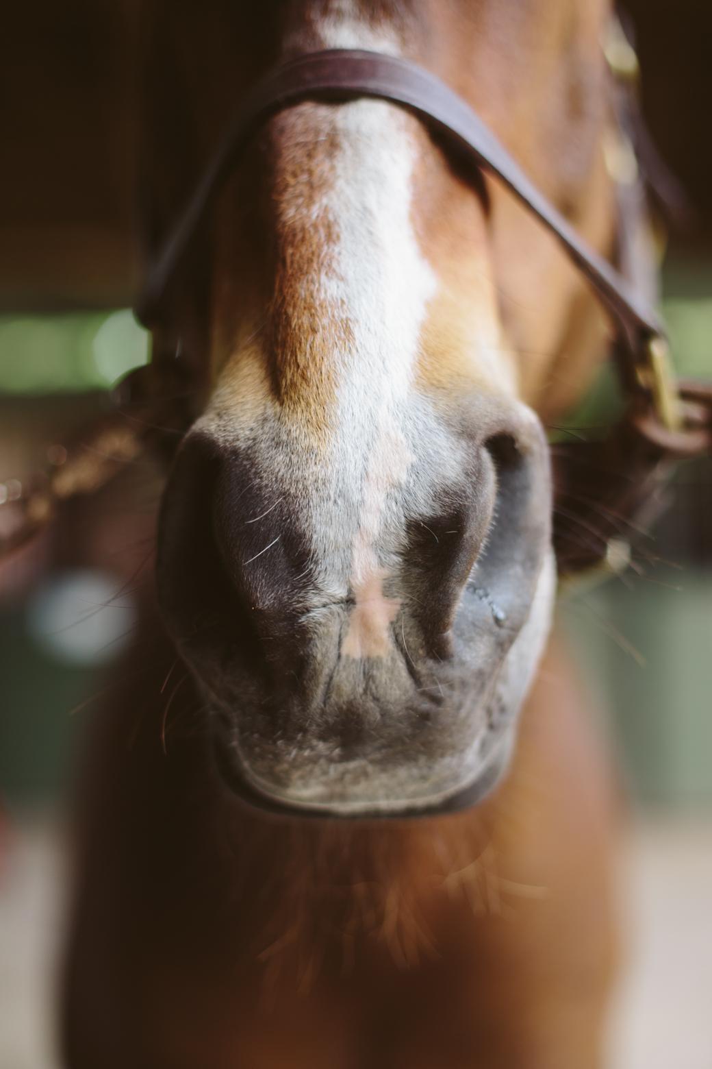 horse rehabilitation