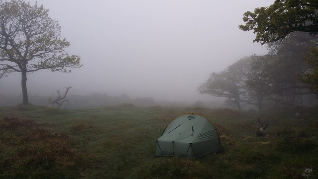 Morning at Black-a-Tor Copse #sh