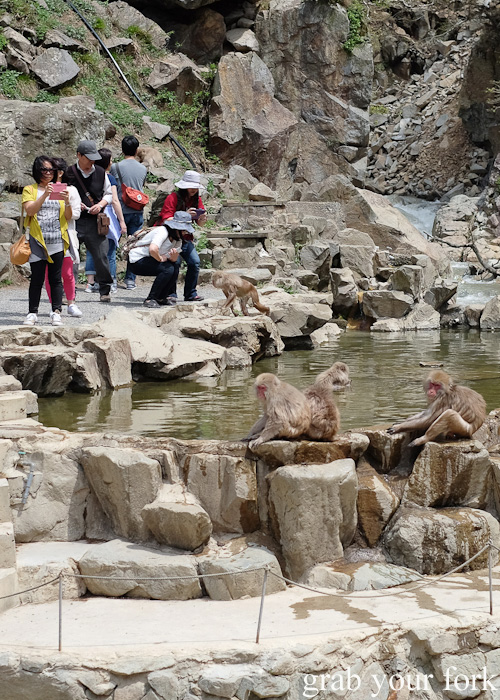 Paparazzi around the snow monkeys in the outdoor onsen in Nagano, Japan