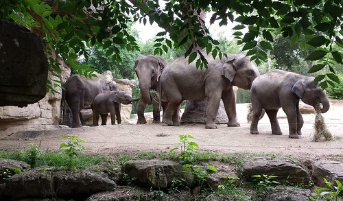 Lunchtime for Elephants