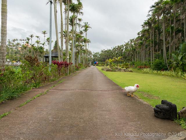 東南植物楽園-95