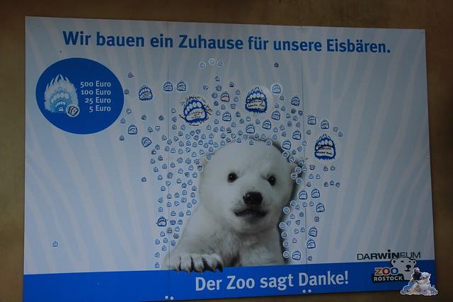 Eisbär Fiete im Zoo Rostock 24.05.2015 146