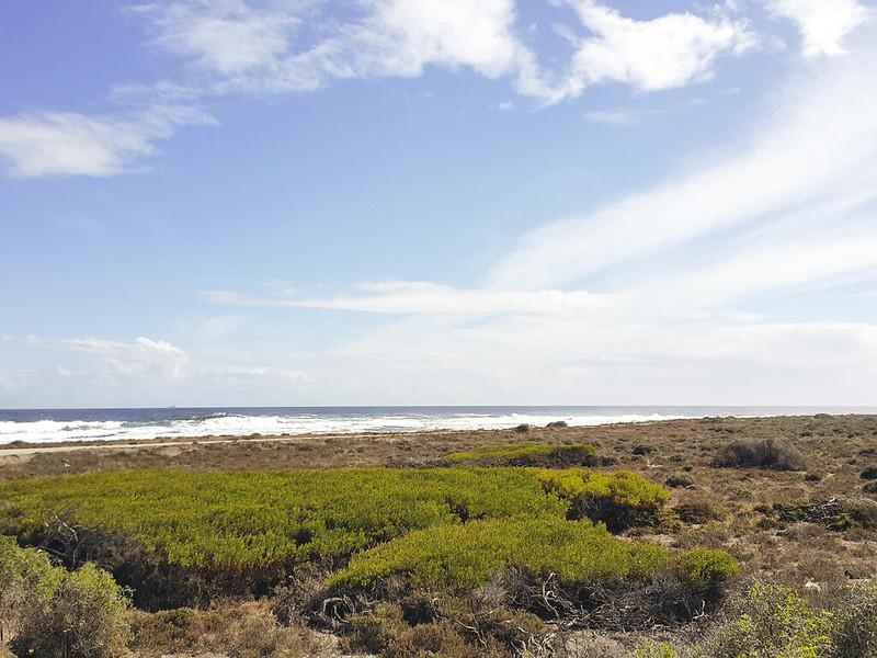 Robben Island nature