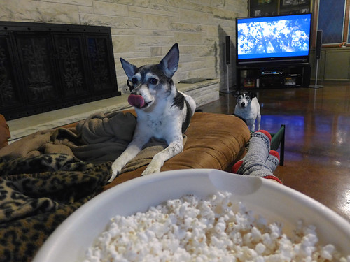 2015-05-24 - Popcorn, Movies, Dogs - 0009 [flickr]
