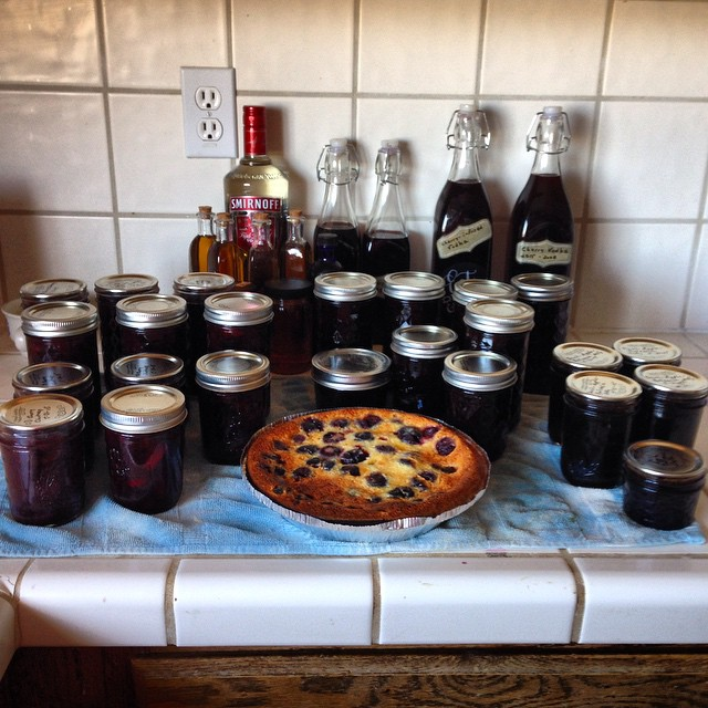 Cherry Harvest 2015: final major phase--(back) baking vanilla, cherry vinegar, cherry vodka. Front: cherry chutney, cherry-amaretto jam, basil-Apple-balsam jelly. Center: 1 of 2 sour-cream-cherry-chocolate pies, and cherry crisp is missing (burp). Froze a