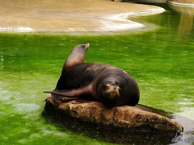 Zoo Berlin 02.06.2015  48