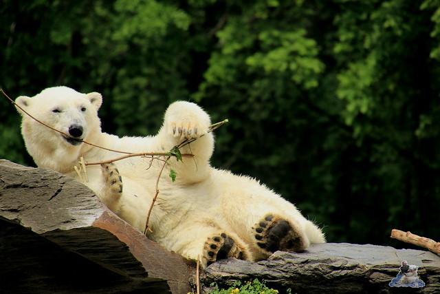 Tierpark Berlin 17.05.2015 143