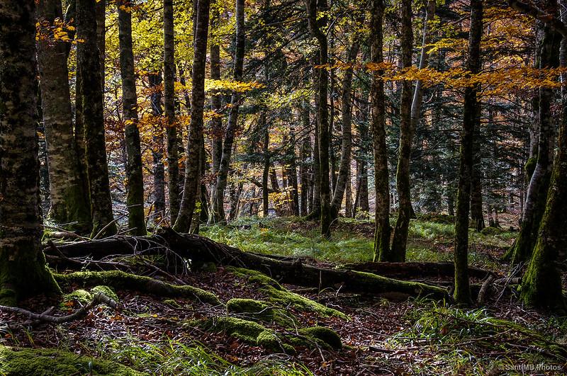 El bosque se regenera.