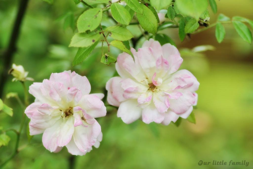 jardinprivée28