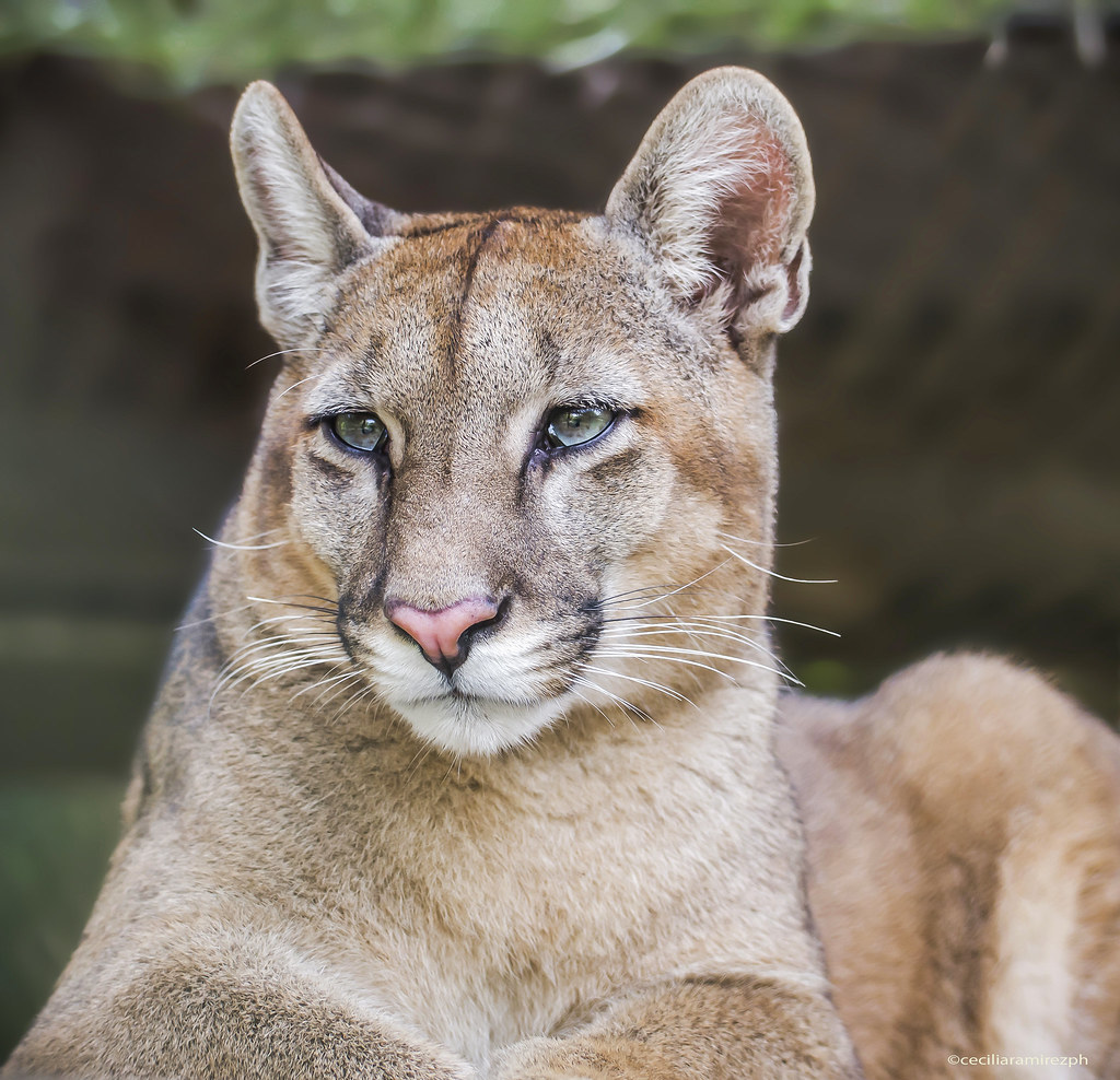 paginas web de putas Puma
