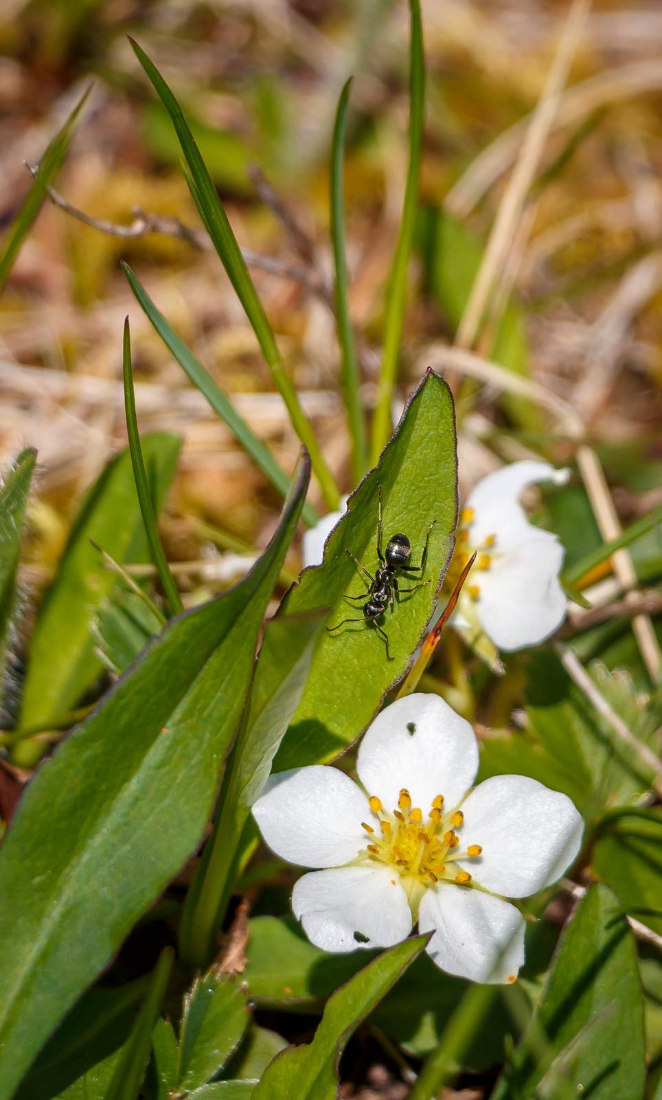 ant on leaf