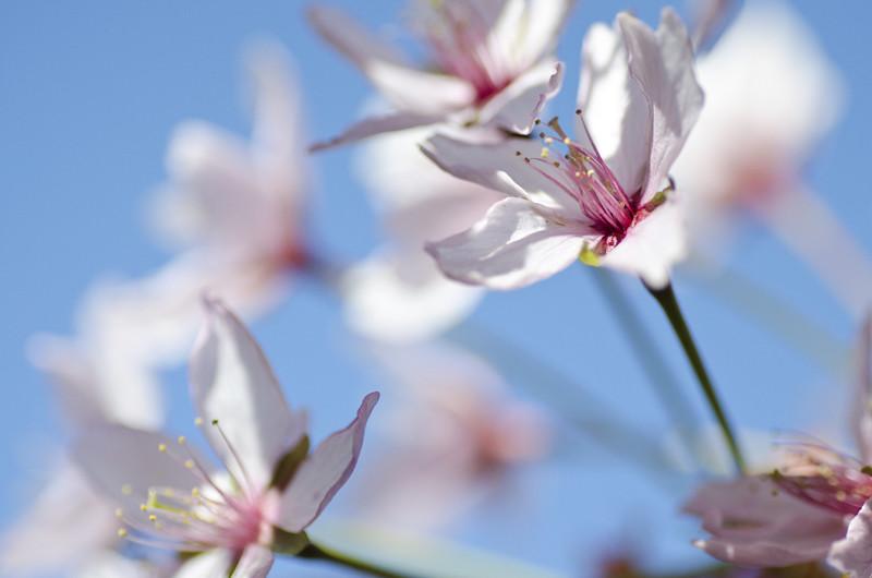 kirsikka8