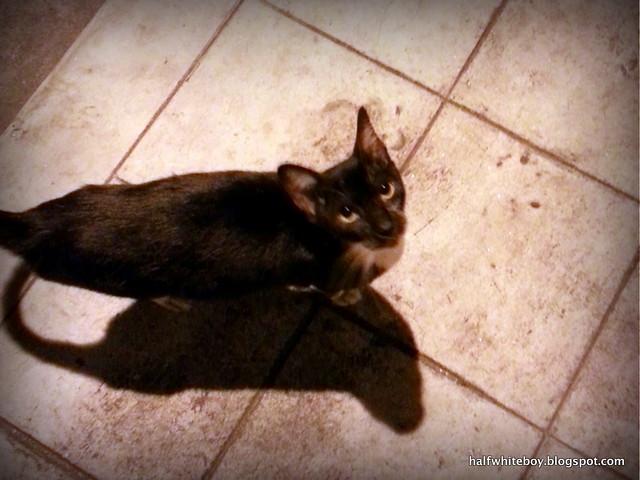 stray cats 06