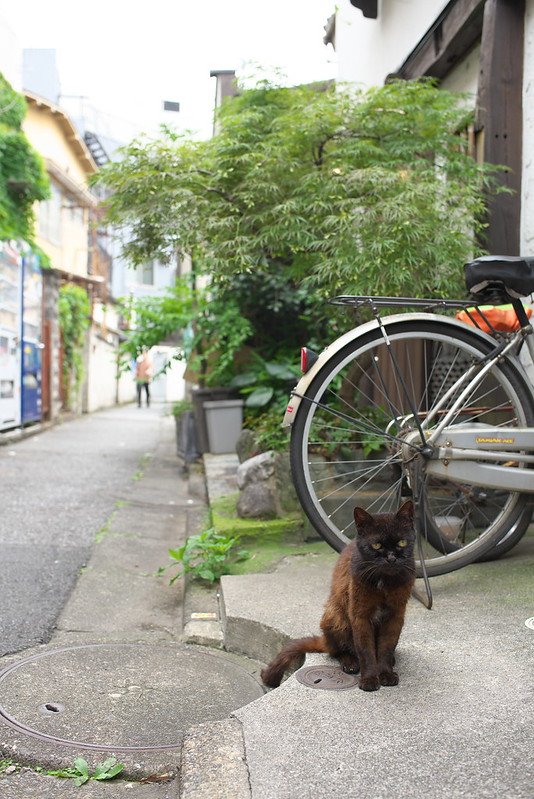 東京路地裏散歩 北千住のネコ 2016年7月16日
