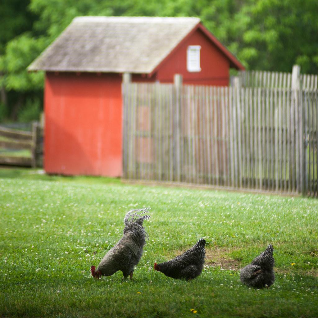 Carriage Hill Farm 2015-8987