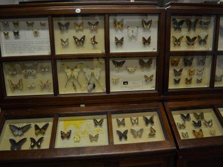 Muzeul de stiinte naturale 2