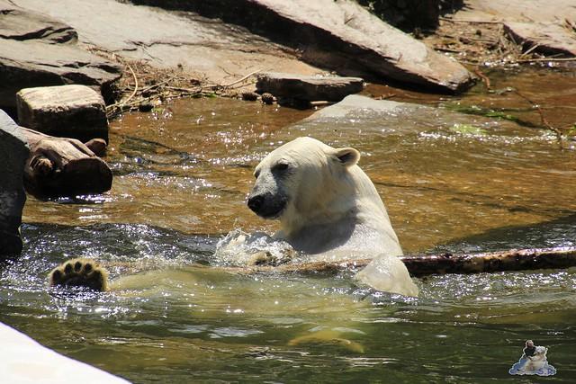 Tierpark Berlin 30.05.2015  239