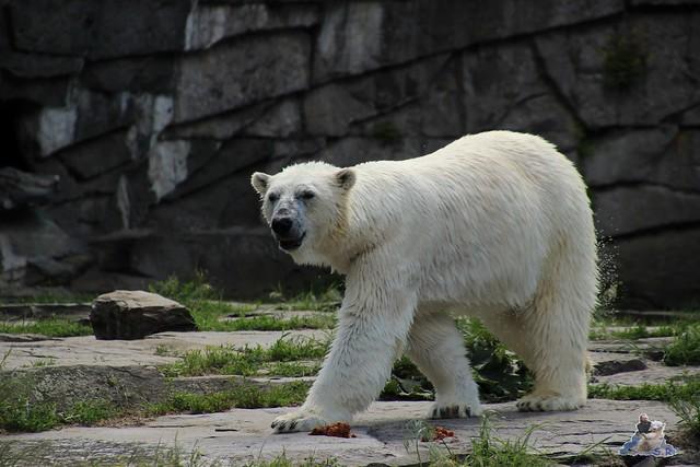 Tierpark Berlin 30.05.2015  254