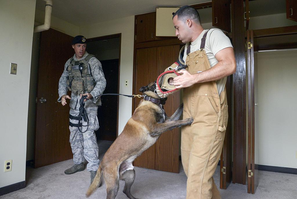 Image Result For Dog Training Sleeve