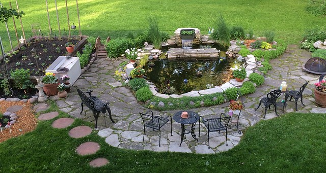 Our koi pond and back yard, Spring 2015
