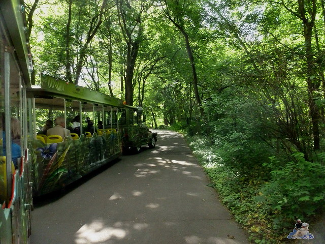 Tierpark Berlin 17.05.2015 195