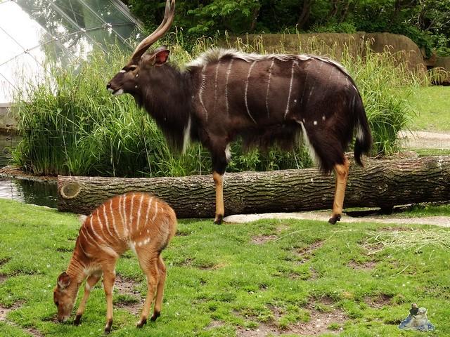 Zoo Berlin 02.06.2015  34
