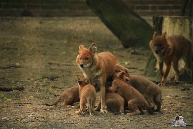 Tierpark Berlin 30.05.2015  137
